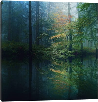 The Forest Canvas Art Print
