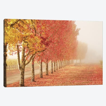 Fall Trees in the Mist Canvas Print #ICS226} by Abhi Ganju Canvas Print