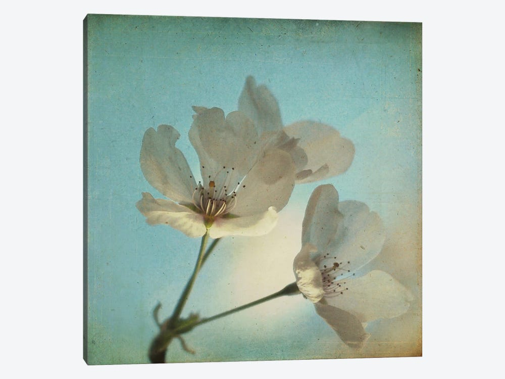 Spring Sings by Dawn D. Hanna 1-piece Canvas Art Print