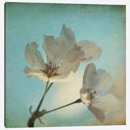 Spring Sings Canvas Print #ICS251} by Dawn D. Hanna Canvas Print