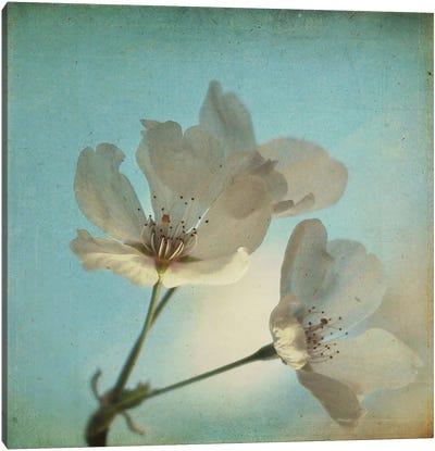 Spring Sings Canvas Art Print