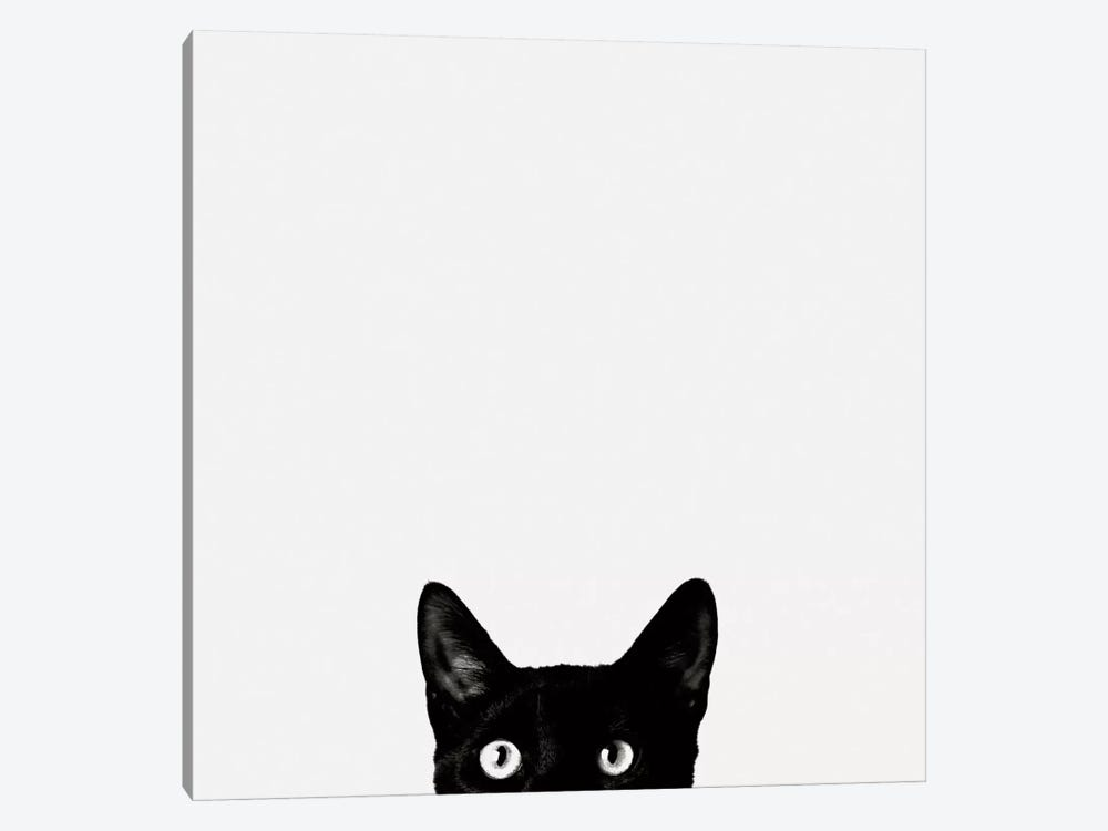 Curiosity 1-piece Canvas Print