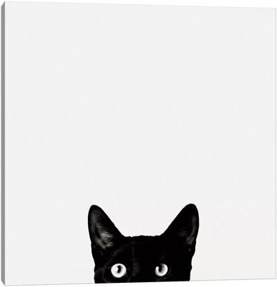 Curiosity Canvas Art Print
