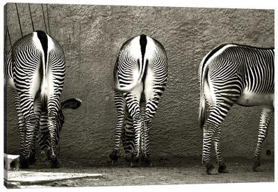 Zebra Butts Canvas Art Print