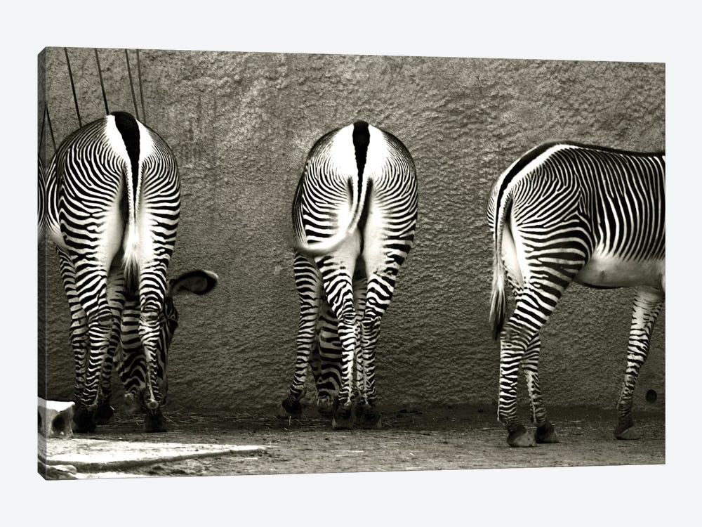Zebra Butts by Courtney Lawhorn 1-piece Canvas Wall Art