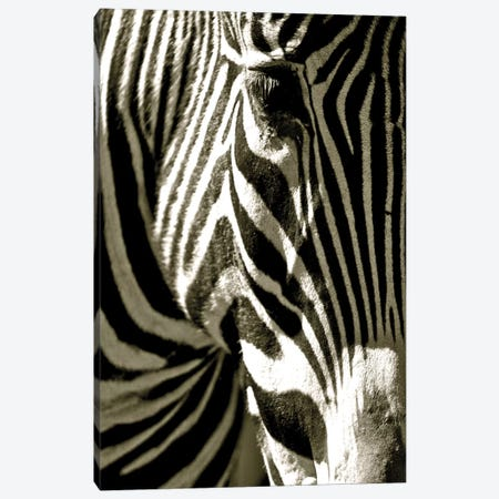 Zebra Head Canvas Print #ICS340} by Courtney Lawhorn Art Print