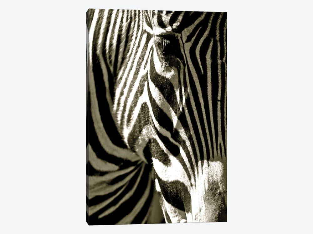 Zebra Head 1-piece Canvas Art