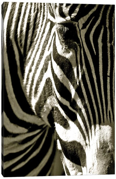 Zebra Head Canvas Art Print