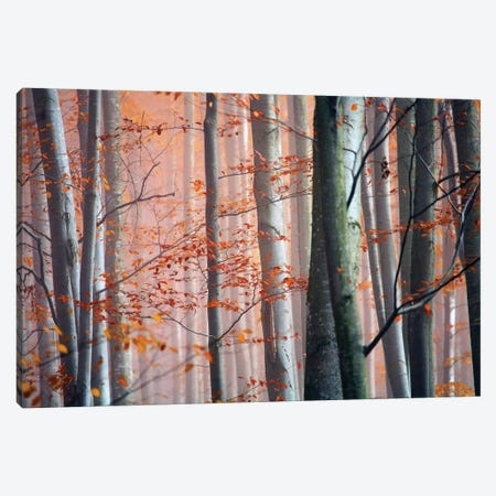 Autumn Woods Canvas Print #ICS402} by PhotoINC Studio Canvas Wall Art