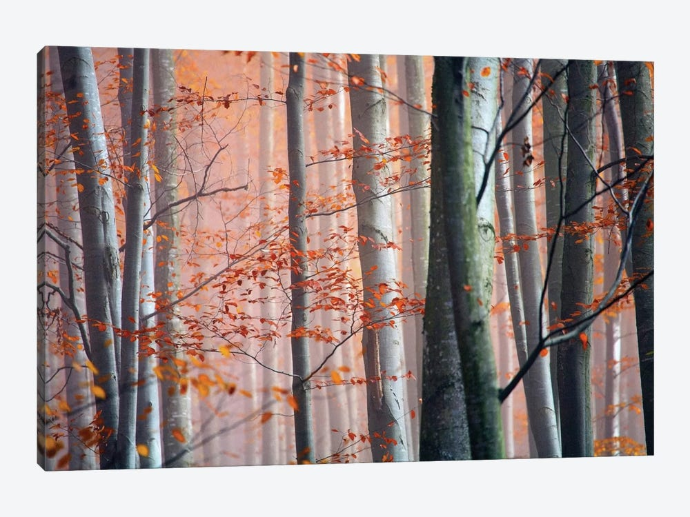 Autumn Woods by PhotoINC Studio 1-piece Canvas Art Print