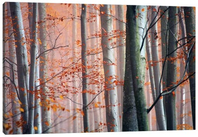 Autumn Woods Canvas Art Print
