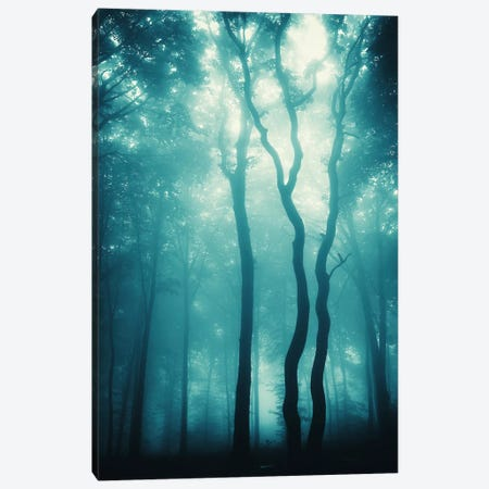 Blue Light Woods Canvas Print #ICS404} by PhotoINC Studio Canvas Print