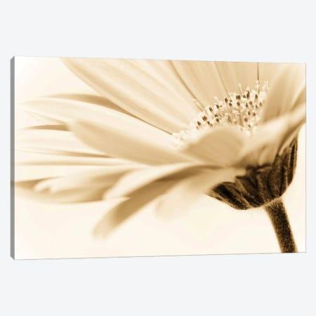 Daisy Canvas Print #ICS408} by PhotoINC Studio Canvas Wall Art