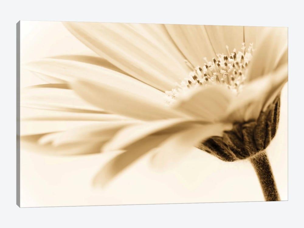 Daisy by PhotoINC Studio 1-piece Canvas Art Print