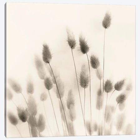 Italian Tall Grass No. 2 Canvas Print #ICS40} by Alan Blaustein Art Print