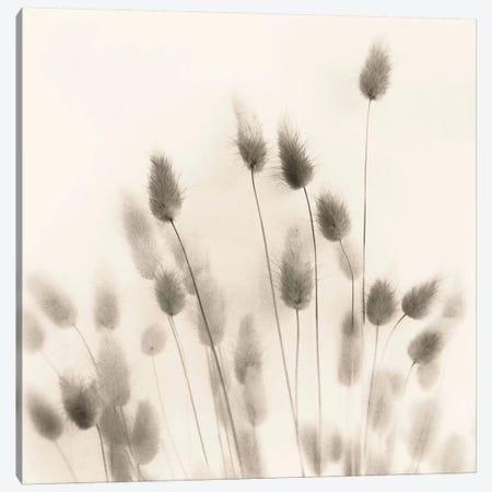 Italian Tall Grass No. 2 Canvas Print #ICS40} by Alan Blaustein Art Print