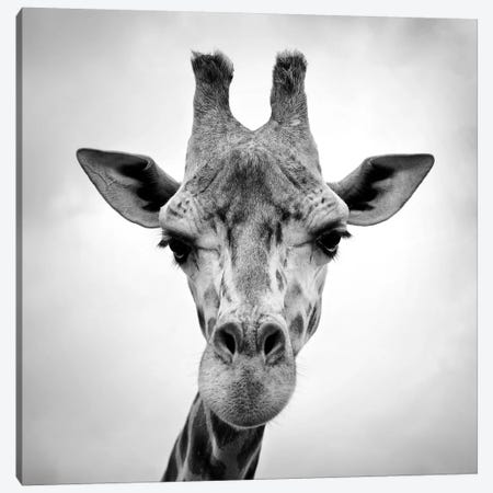 Giraffe Canvas Print #ICS413} by PhotoINC Studio Canvas Print