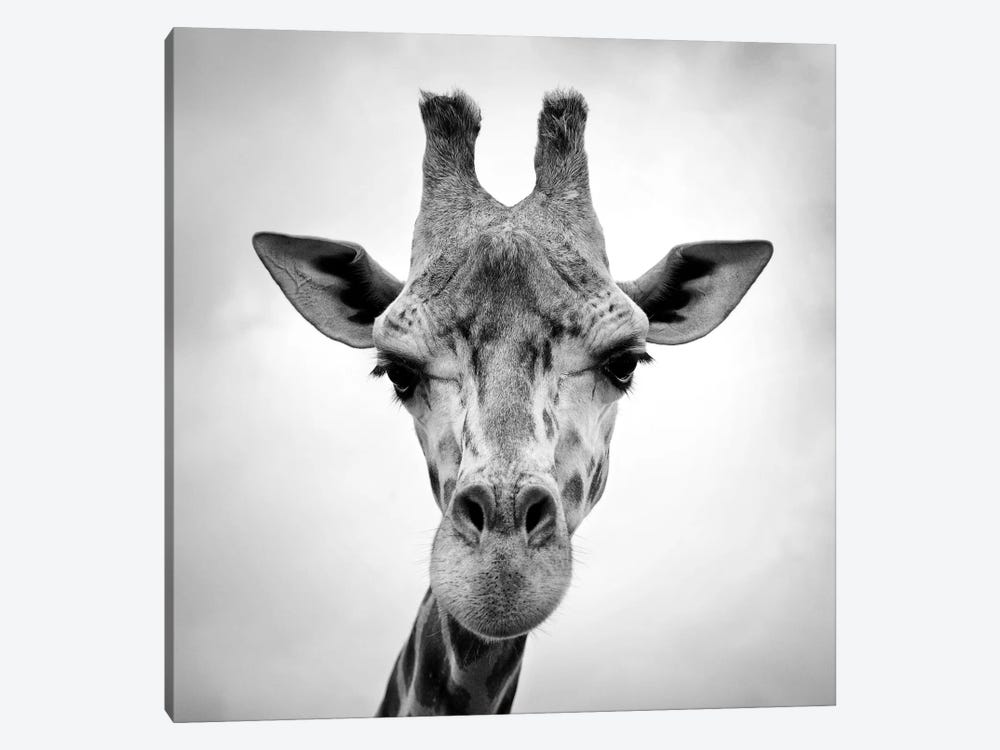 Giraffe by PhotoINC Studio 1-piece Art Print