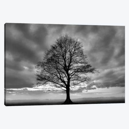 Great Tree Canvas Print #ICS414} by PhotoINC Studio Canvas Artwork