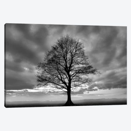 Great Tree Canvas Print #ICS414} by PhotoINC Studio Canvas Artwork