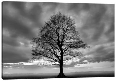 Great Tree Canvas Art Print