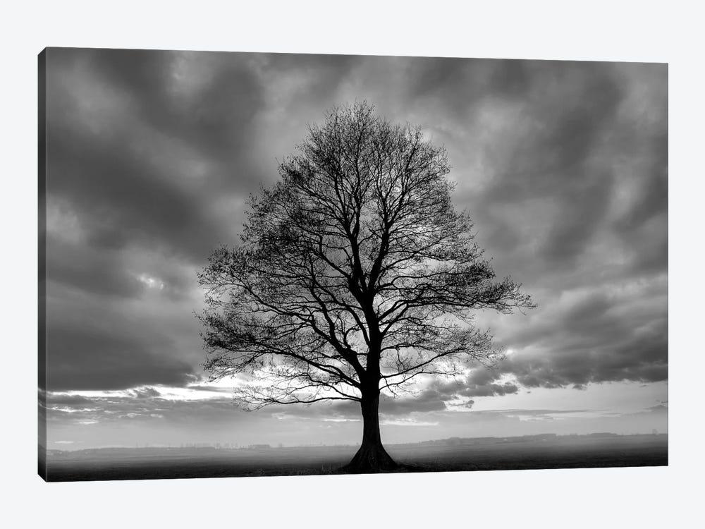 Great Tree by PhotoINC Studio 1-piece Canvas Artwork