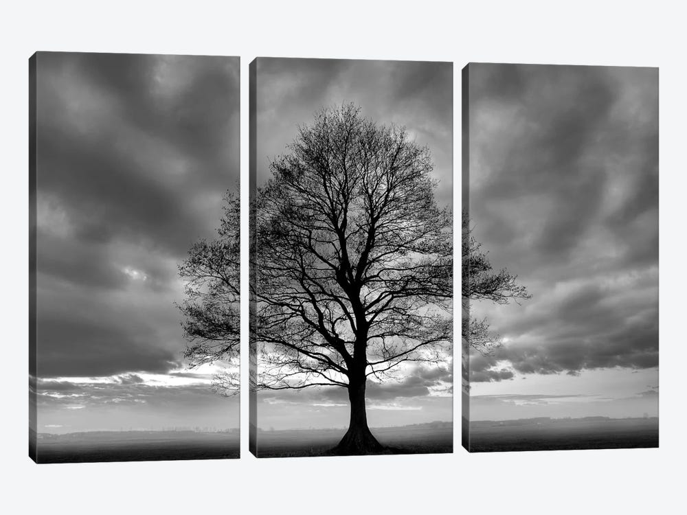 Great Tree by PhotoINC Studio 3-piece Canvas Wall Art