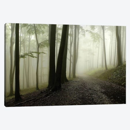 Green Woods 1 Canvas Print #ICS415} by PhotoINC Studio Canvas Artwork