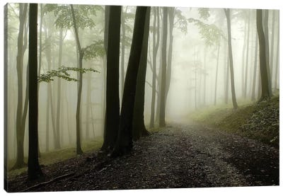 Green Woods 1 Canvas Art Print