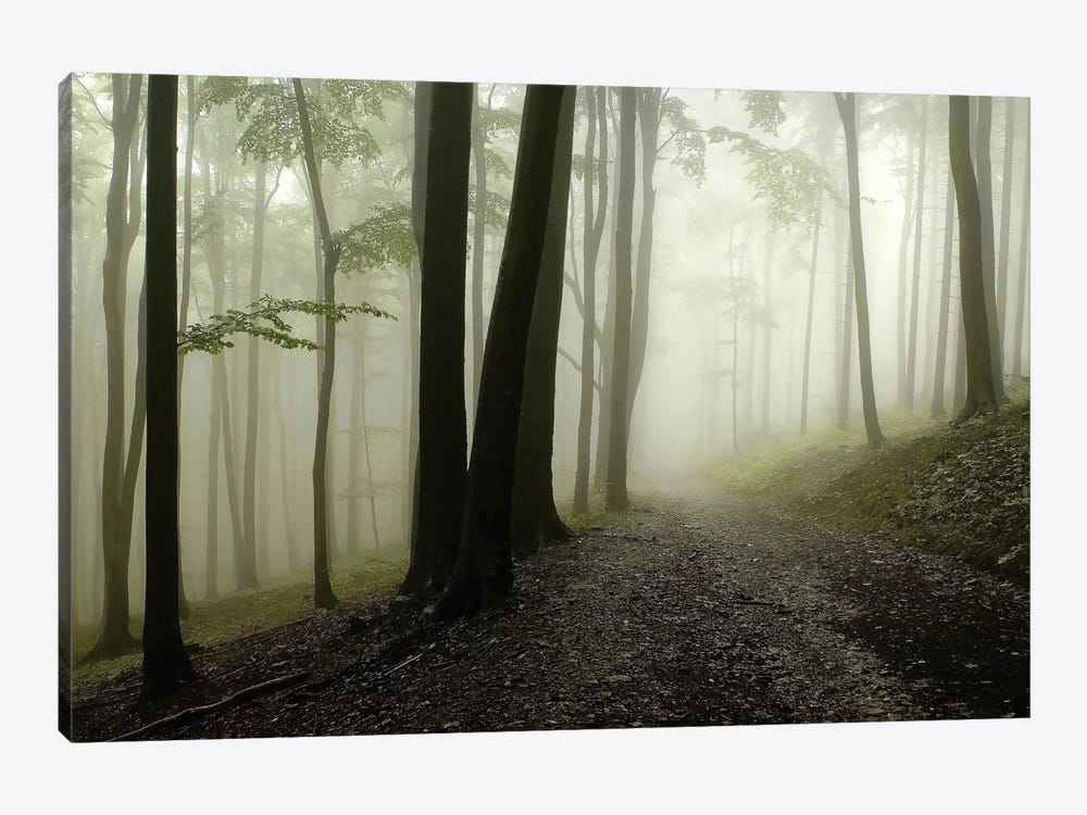 Green Woods 1 by PhotoINC Studio 1-piece Art Print