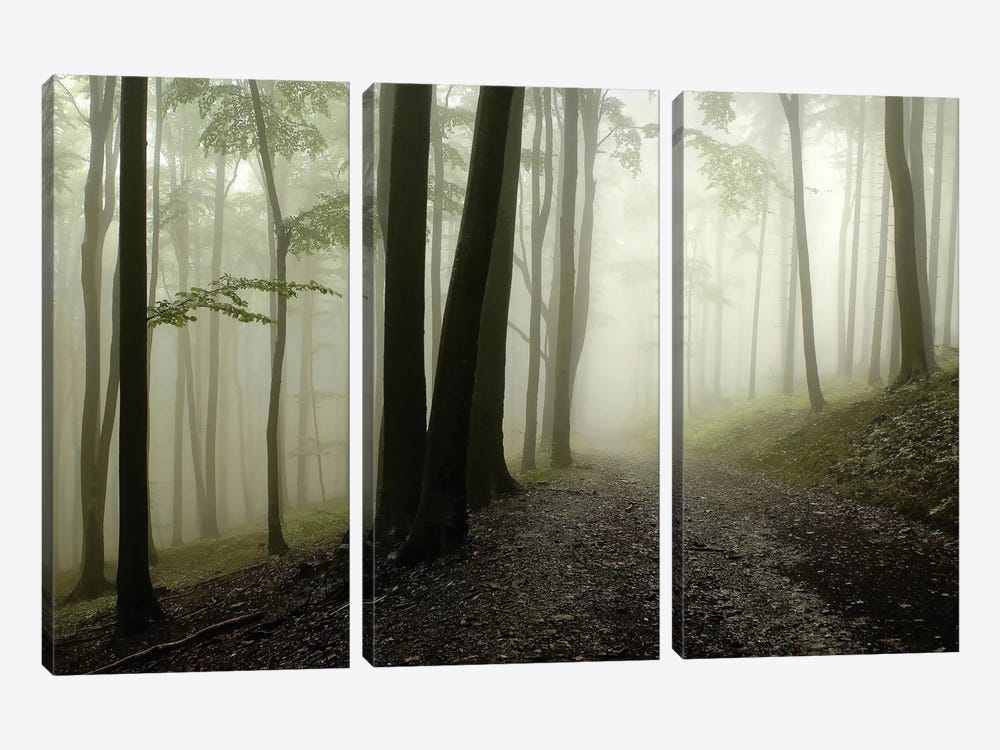 Green Woods 1 by PhotoINC Studio 3-piece Canvas Art Print