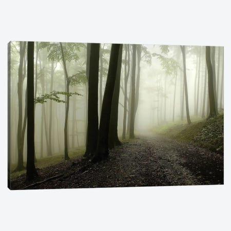 Green Woods 1 3-Piece Canvas #ICS415} by PhotoINC Studio Canvas Artwork