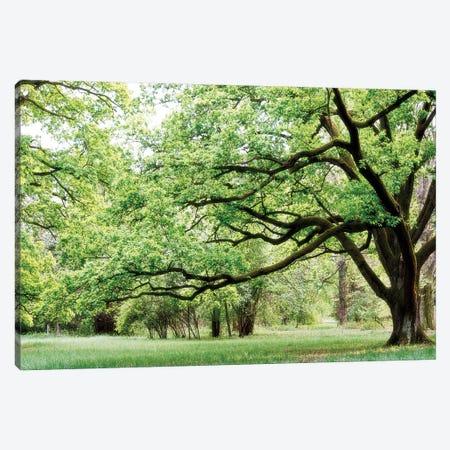 Green Woods 4 Canvas Print #ICS416} by PhotoINC Studio Canvas Art