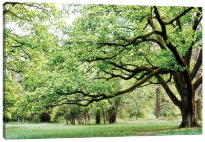 Green Woods 4 Canvas Art Print