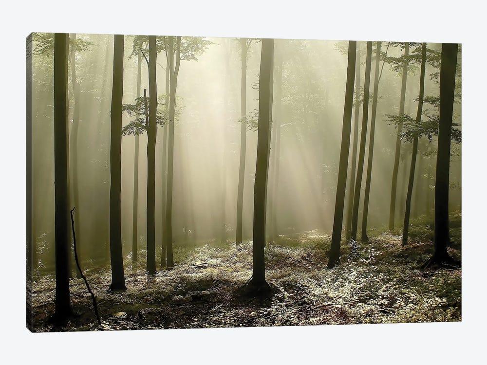 Green Works by PhotoINC Studio 1-piece Canvas Art Print