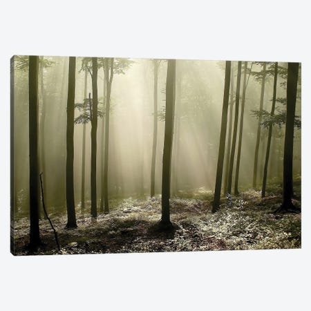Green Works Canvas Print #ICS417} by PhotoINC Studio Canvas Art