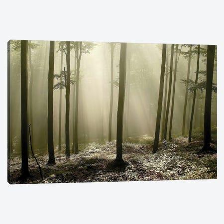 Green Works Canvas Print #ICS417} by PhotoINC Studio Canvas Art