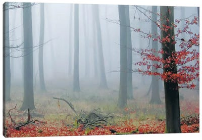 Misty Woods Canvas Art Print