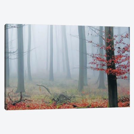 Misty Woods Canvas Print #ICS420} by PhotoINC Studio Canvas Art
