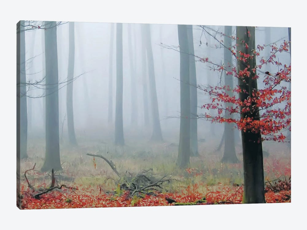 Misty Woods by PhotoINC Studio 1-piece Canvas Print