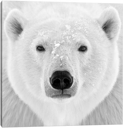 Polar Bear Canvas Print #ICS424
