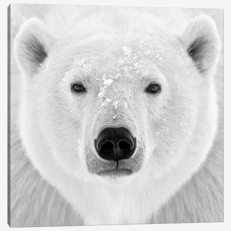 Polar Bear Canvas Print #ICS424} by PhotoINC Studio Art Print