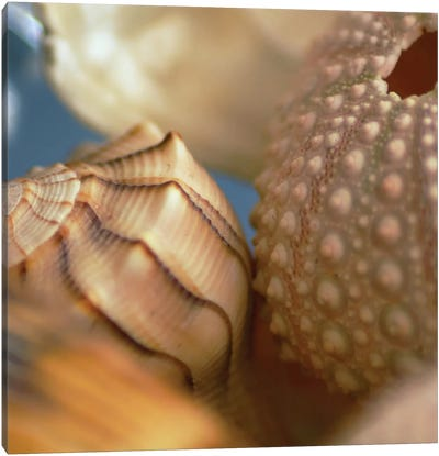 Shells 1 Canvas Art Print
