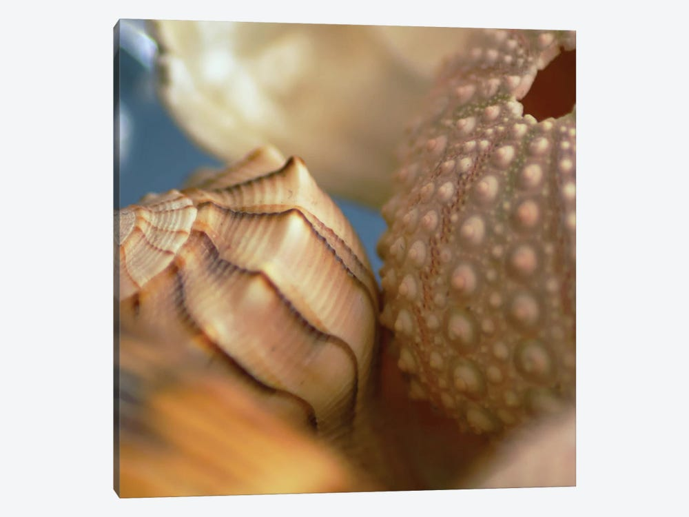 Shells 1 by PhotoINC Studio 1-piece Art Print