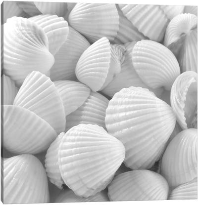 Shells 3 Canvas Art Print