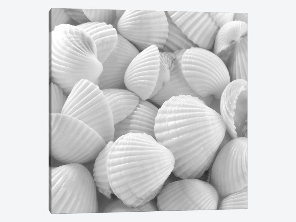 Shells 3 by PhotoINC Studio 1-piece Canvas Wall Art