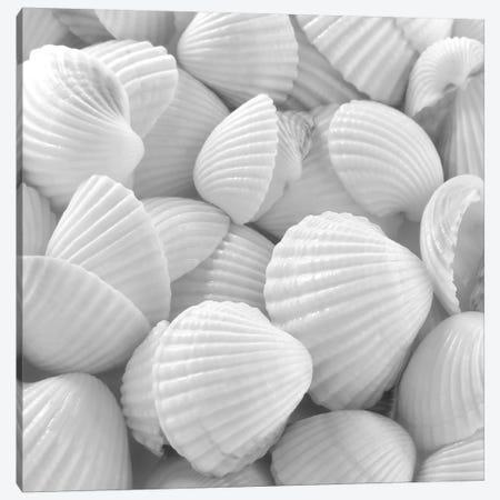 Shells 3 Canvas Print #ICS429} by PhotoINC Studio Canvas Artwork