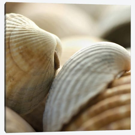Shells 4 Canvas Print #ICS430} by PhotoINC Studio Canvas Art Print