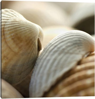 Shells 4 Canvas Art Print