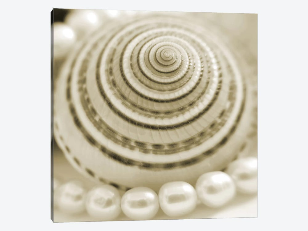 Shells and Pearls 1 by PhotoINC Studio 1-piece Canvas Art Print